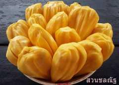 ขนุนทองส้ม