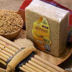 ข้าวกล้องหอมมะลิอินทรีย์สุรินทร์ Organic Brown Rice