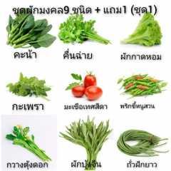 ชุดเมล็ดผัก9ชนิด + แถมฟรี1 ชนิด
